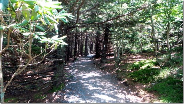 Carvers Gap Hike