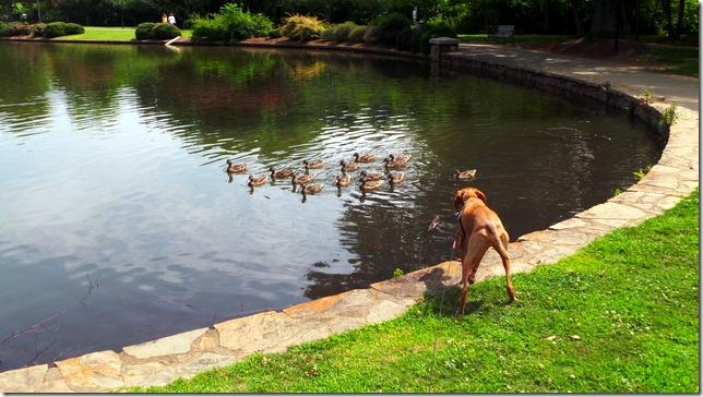 Freedom Park Ducks