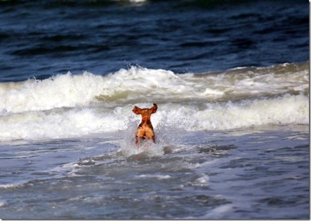 Dog Playing Beach