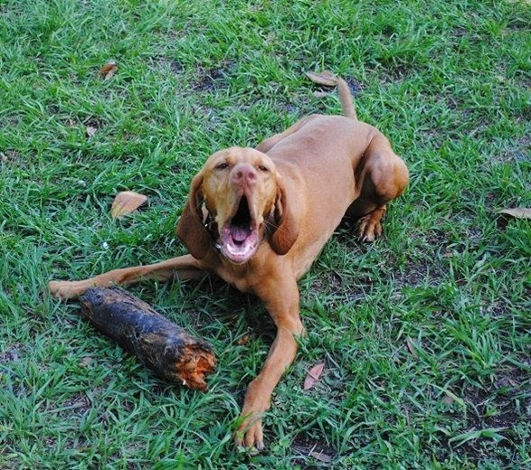 dog with stick_thumb[1]