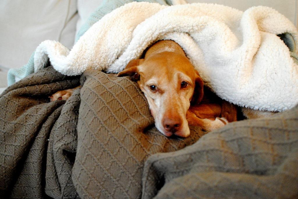 Adorably Cute Scrambled Egg Pet Blanket