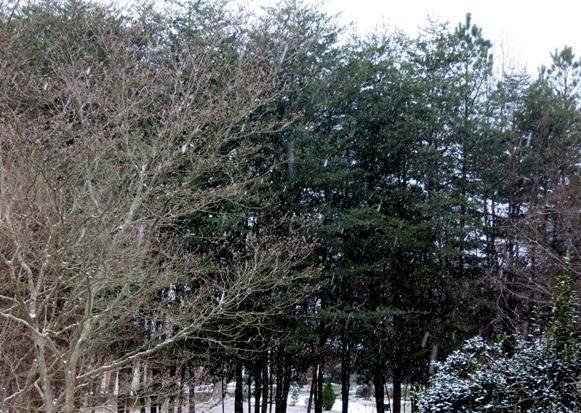 snow charlotte