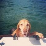 dog climbing onto boat