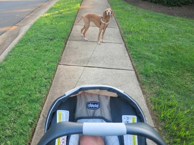 Walk with Sadie