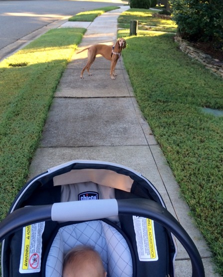 walking dog and baby