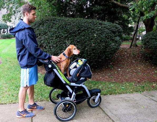 dog walking in stroller