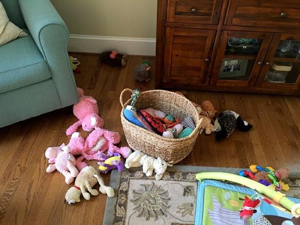 Dog Toys Everywhere