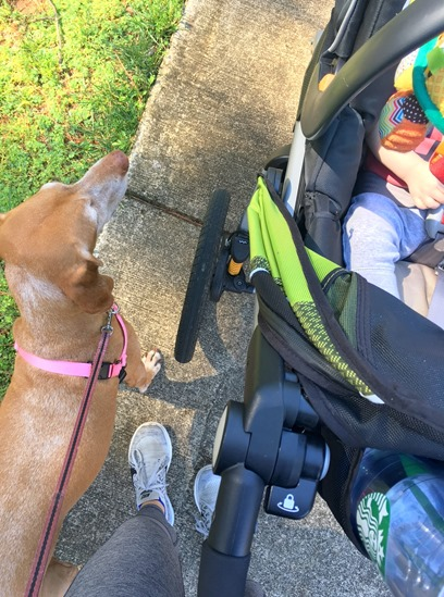 Walk with Baby and Dog