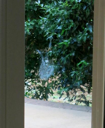 robin outline on window
