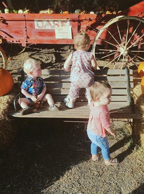 carrigan farms pumpkins