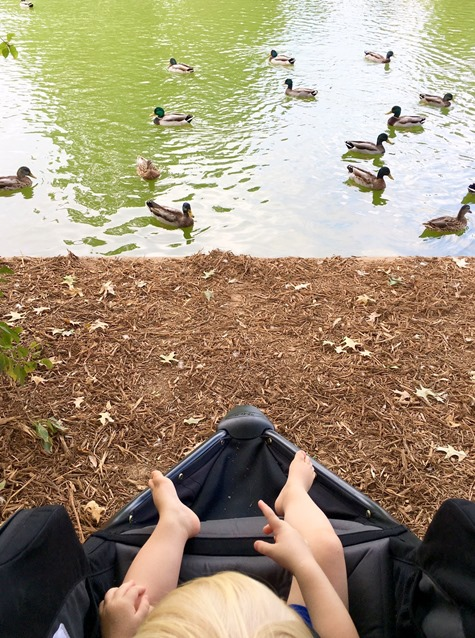 Freedom Park Charlotte Ducks