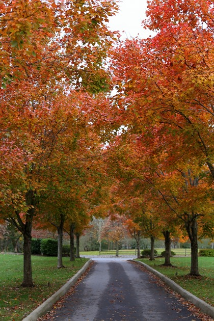 Black Mountain NC Leaves