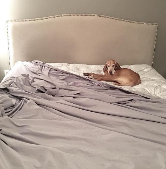Sadie on Bed