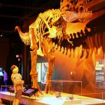 Discovery Place TRex