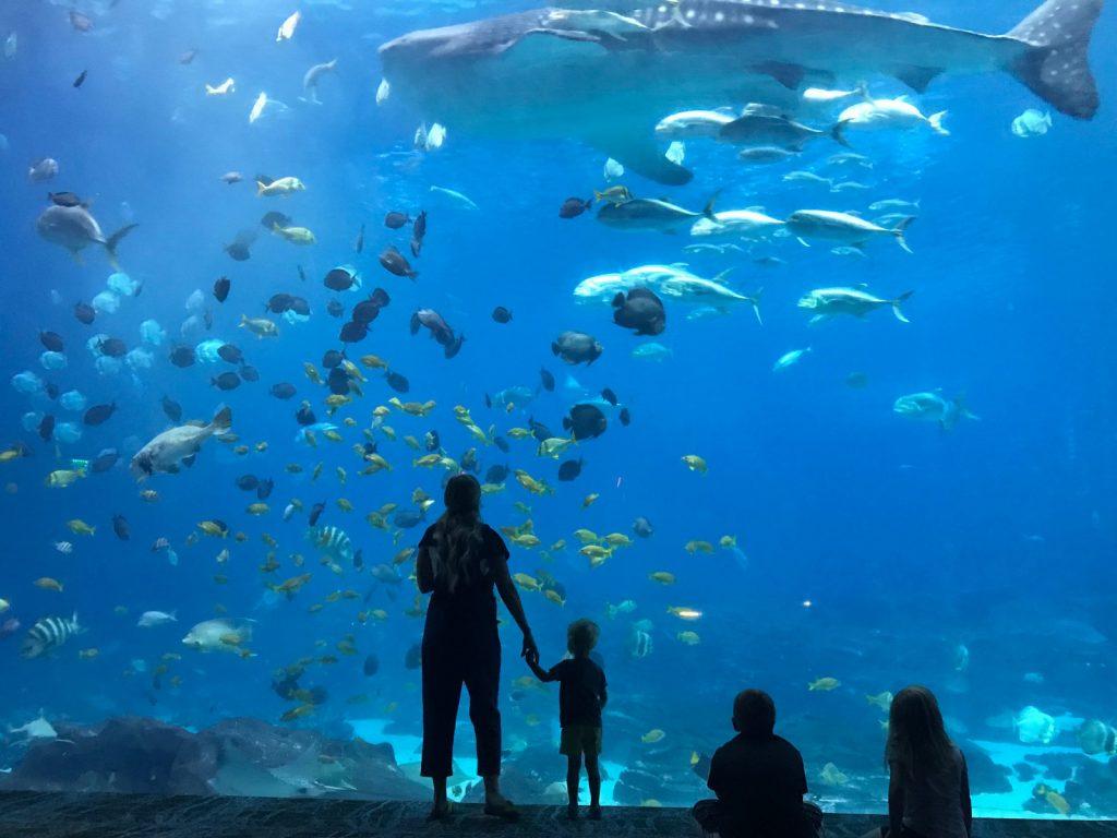Georgia Aquarium Whale Sharks