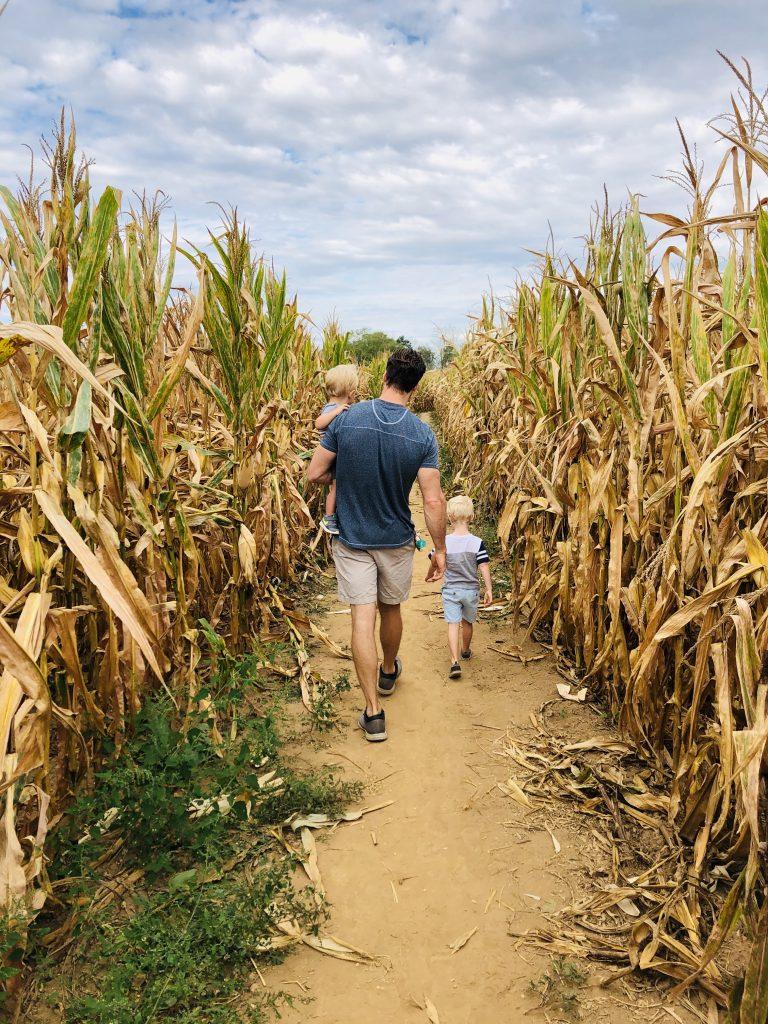 alpha & omega corn maze