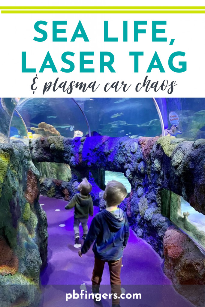 Sea Life, Laser Tag and Plasma Car Chaos