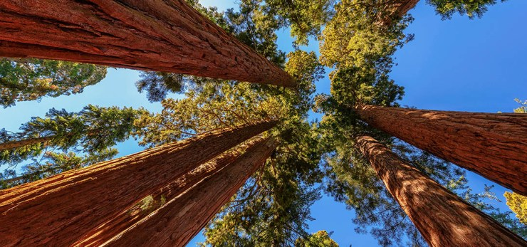 Search for the Tallest Trees in Sequoia National Park | Hertz