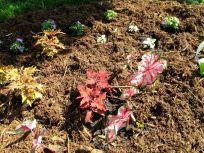 Mix of shade-tolerant annuals