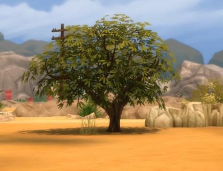 mts_plasticbox-1488947-pbox_liberated-plants-desert_03