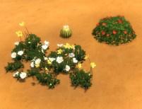 mts_plasticbox-1488950-pbox_liberated-plants-desert_06