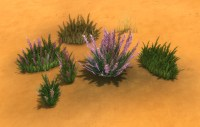 mts_plasticbox-1488951-pbox_liberated-plants-desert_01