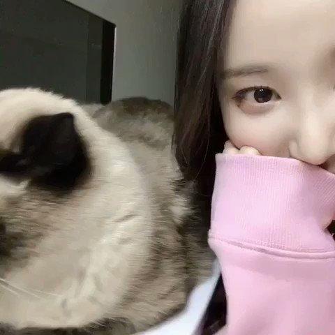Image for the Tweet beginning: [#답니🦊] 今日 日本は猫の日なんですよね 猫の日にやっぱり猫の背中が良いんじゃないんですか?おすすめしますん🐾🐾 #모모랜드 #モモランド