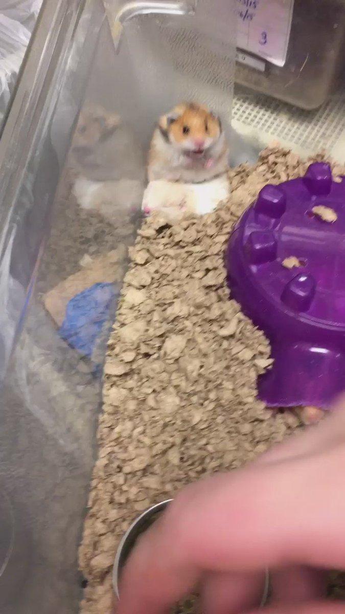 Hamster Cloud Blog Pet Care