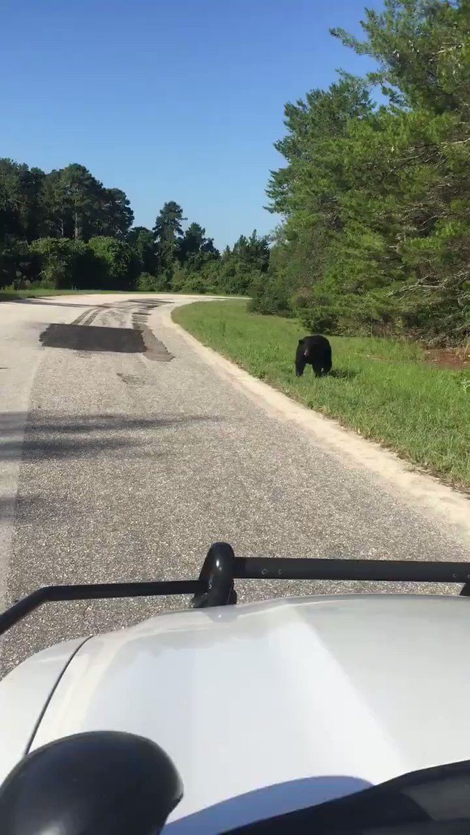 .@mcsoflorida deputy has close encounter with curious bear
