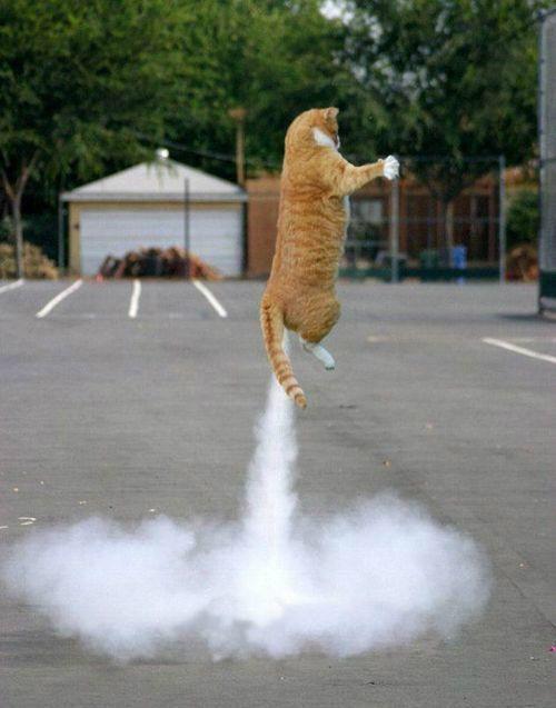 test ツイッターメディア - 「3・・・2・・・1・・・発射!!!」 ネコ「にゃーーーーーーーーー!!!」 気に入ればRTお願いいたします! https://t.co/1jYnWX8Zbs