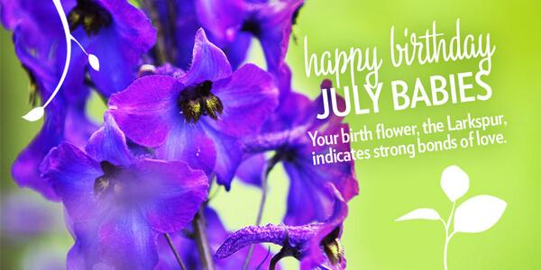 Miracle Gro On Twitter Happy Birthday July Babies Your Birth Flower The Larkspur Indicates Strong Bonds Of Love Http T Co Hdccpmdaw7