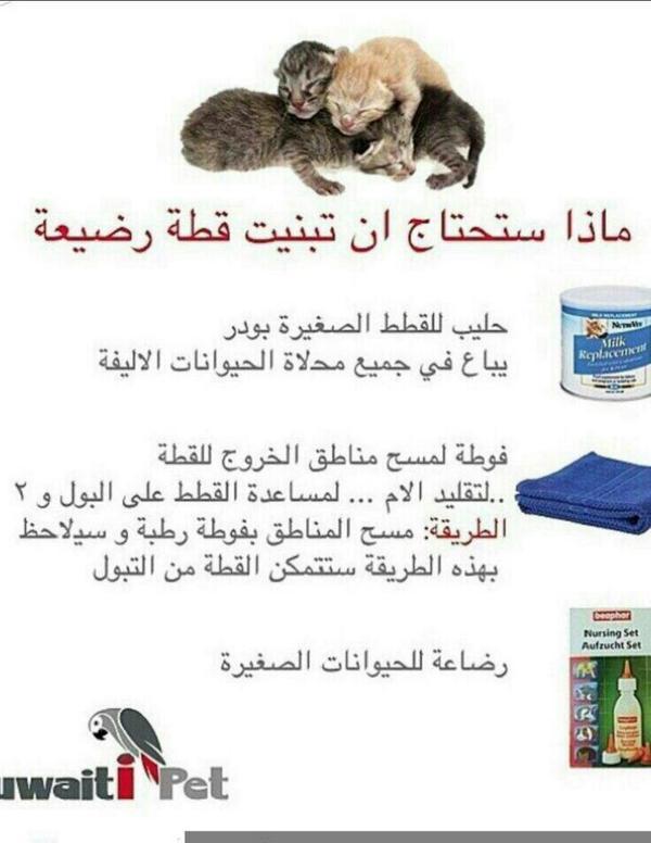 تربية القطط On Twitter Ranya Bukhari ممكن تستبدل الحليب المخصص للقطط بحليب خالي من اللاكتوز من اي صيدلية بشرية Http T Co Be3ynqratq