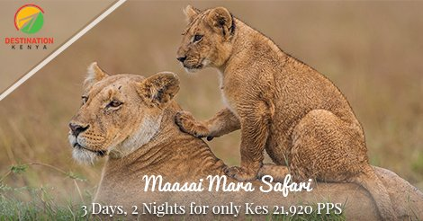 test Twitter Media - After #NairobiDecides and #NASAFlagbearer manenos; it's time to unwind with #DestinationKenya safaris! Check out offers for #LabourDay & May https://t.co/KCH866BunS