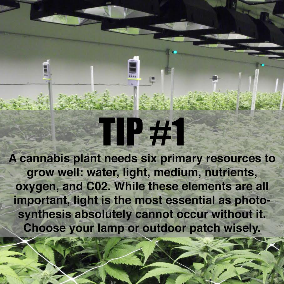 Check out our 3 beginner grow tips of the week! Here's #1 to get you started.