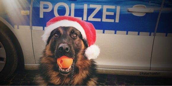 Image result for polizeiamt leonberg