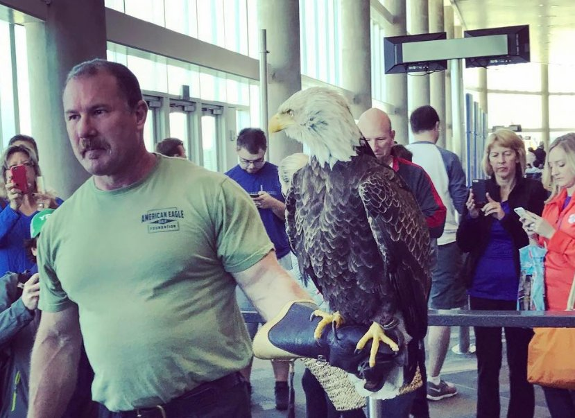 How to get a (famous) bald eagle through security at @FlyTPA.
