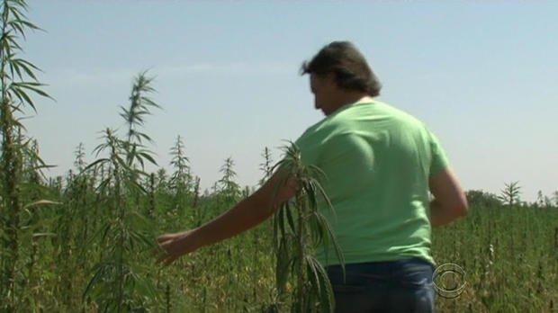 Farmers in #Italy fight soil contamination with cannabis    #MME #Hemp #cannabis #marijuana