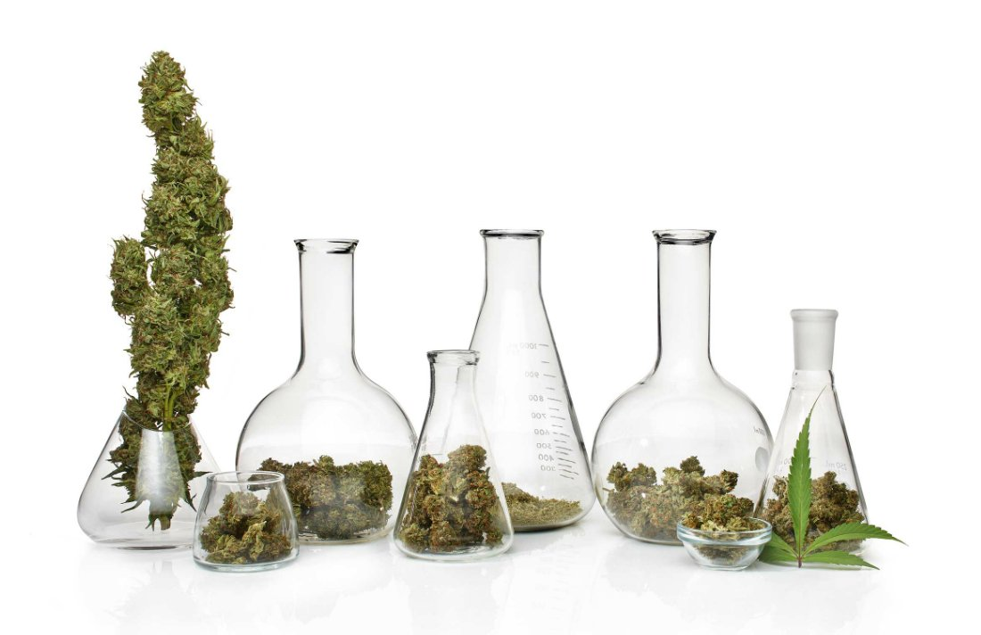 7 Reasons Why Cannabis Will Dominate the Wellness World in 2017 #MMJ #Health