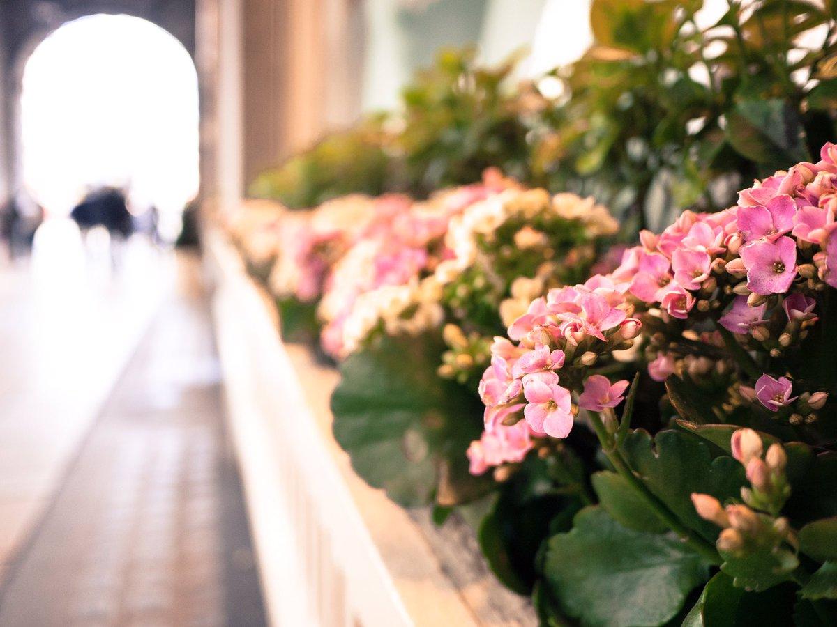 Ritz flowers cv