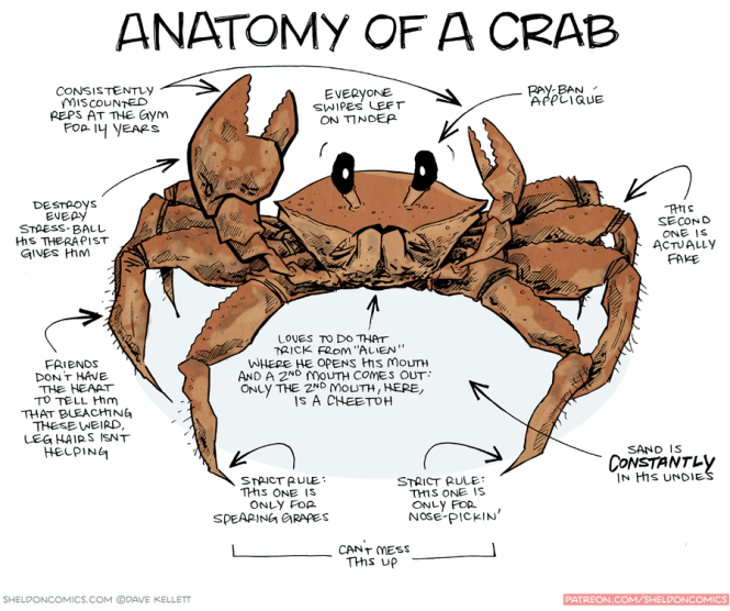 Beautiful Blue Crab Internal Anatomy Festooning Anatomy And