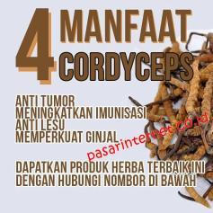 manfaat cordycep