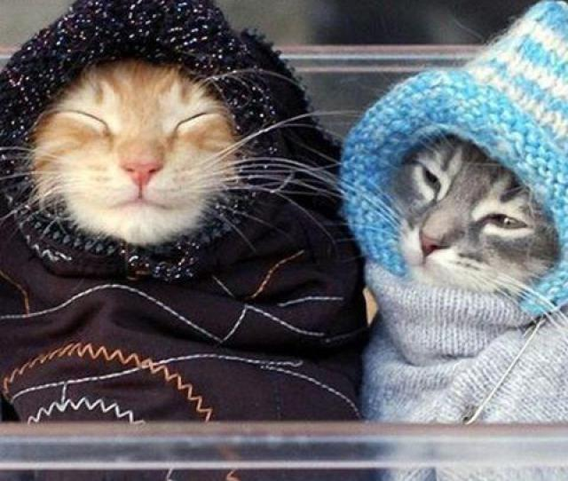 Advice For The Weekend Rug Up Find Good Company To Snuggle Up To Stay Warm Enjoy Your Weekend Yoginis Pic Twitter Com Pellopdl