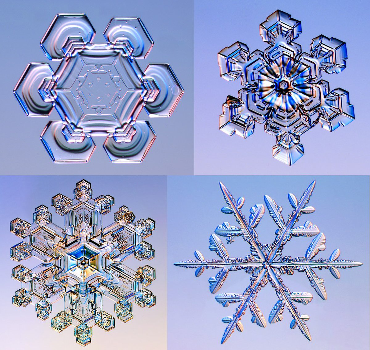 Snowflakes Under A Microscope Via Reddit