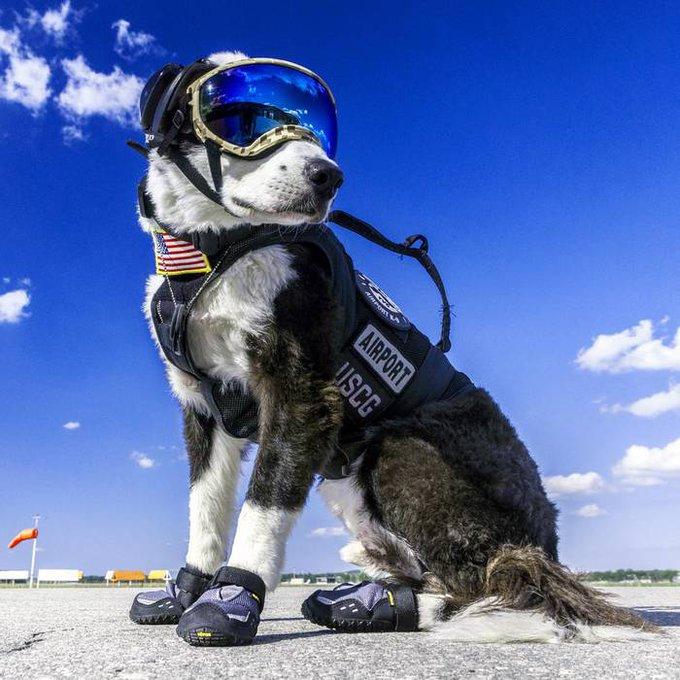 空の安全は俺が守る!空港警備犬「パイパー」君がカッコ ...