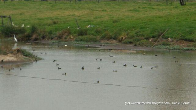 Espejo de agua Guaymaral bajo