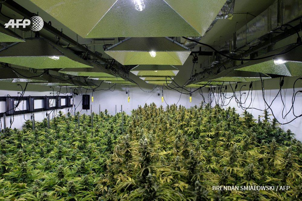 A Washington, la marijuana se cultive à deux pas de la Maison Blanche  @ElodieMazein #AFP