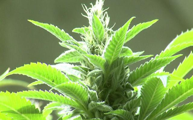 #Vermont Kills Marijuana Legalization Bill.