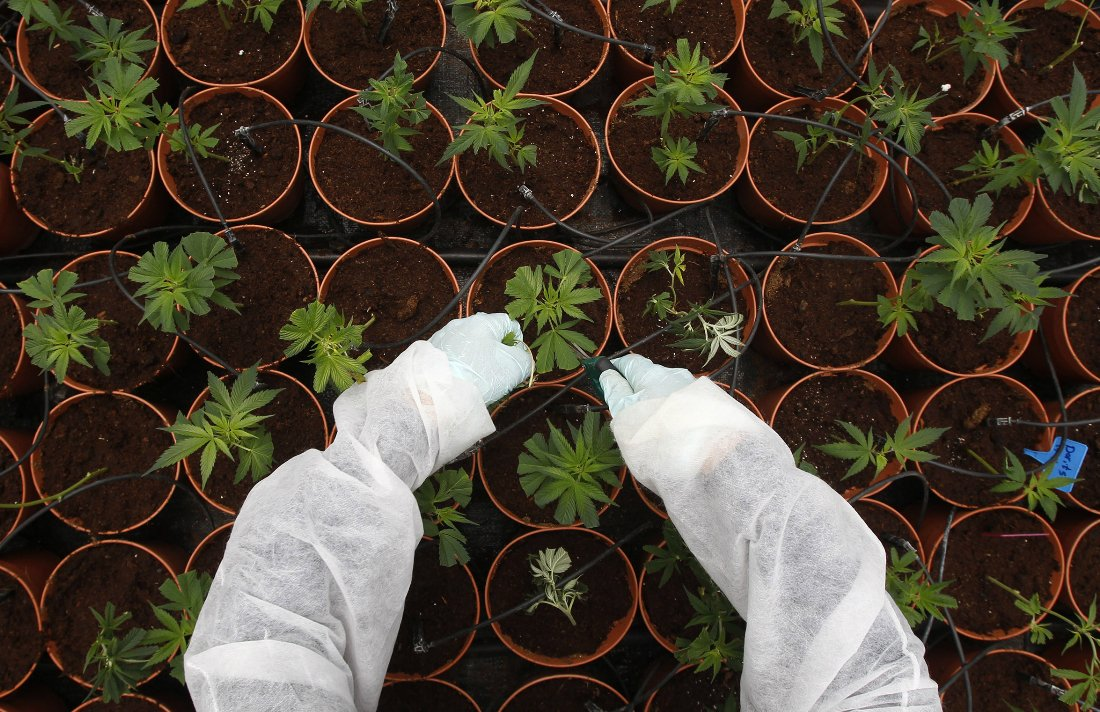 Germany to Legalize Medicinal Marijuana by 2017 #MMJ #Germany #legal