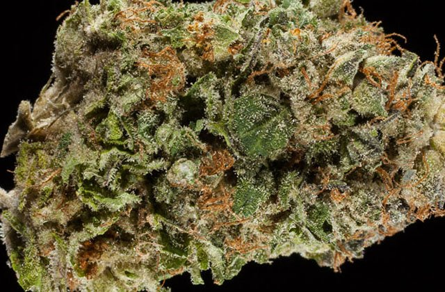 Check 'Em Out! The Top 10 #Indica Flowers from the 2016 Colorado #CannabisCup