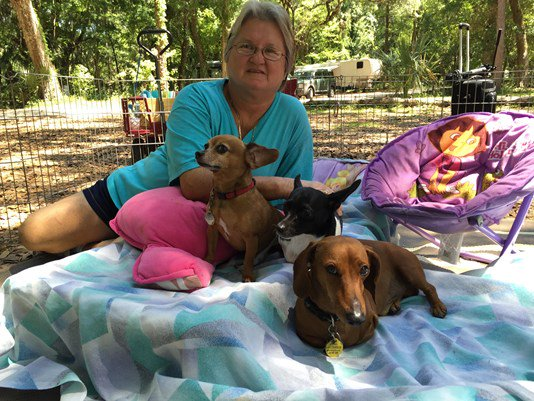 Woman, dogs create 'Perfect 10' family  @Bobby_L has the unique story: